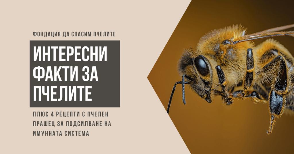 Интересни факти за медоносните пчели