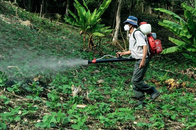 Пестицидите и тяхната вреда за пчелите