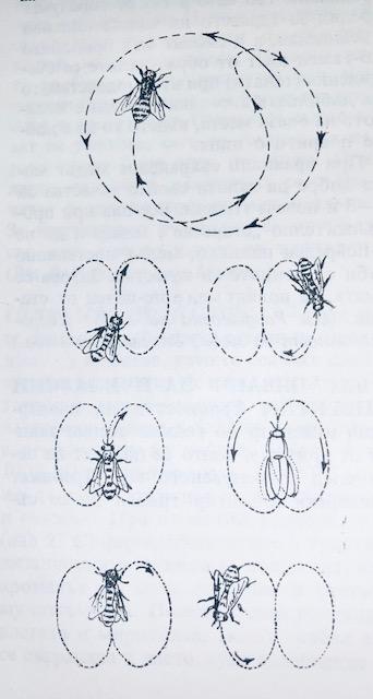 Танцът на пчелата