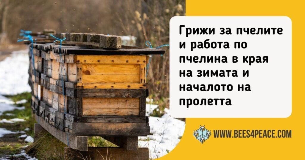 Грижи за пчелите и работа по пчелина в края на зимата и началото на пролетта