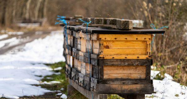 Грижи за пчелите през зимата